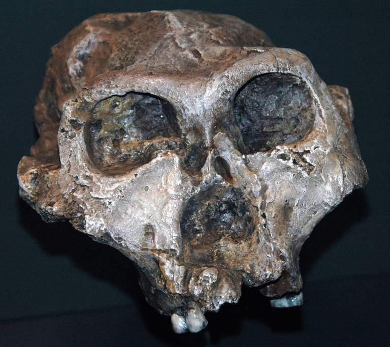 Zahnwurzeln: was wir über das Kauverhalten unserer Vorfahren wissen